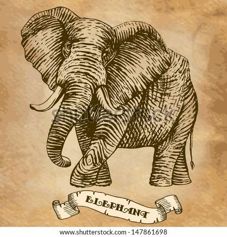 elephant. illustration, stylized engraving - stock vector