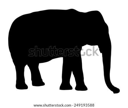 Elephant on white - stock vector