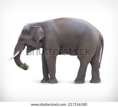Elephant, vector illustration - stock vector