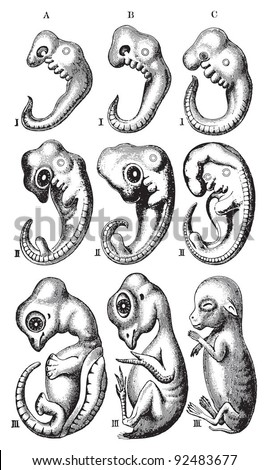 Embryo Development Stock Images, Royalty-Free Images ...