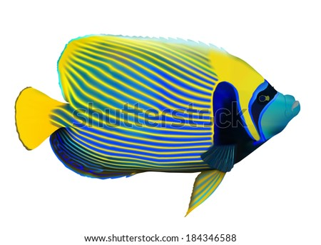 Emperor angelfish (Pomacanthus imperator) on white, vector illustration. - stock vector