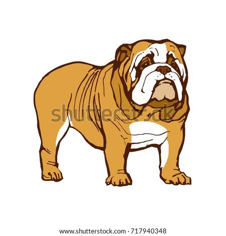 English Bulldog Stock Images RoyaltyFree Images Vectors