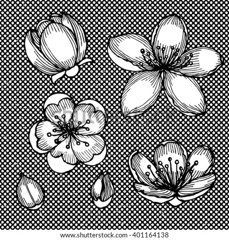 Engraved cherry blossom in vintage style, vector - stock vector