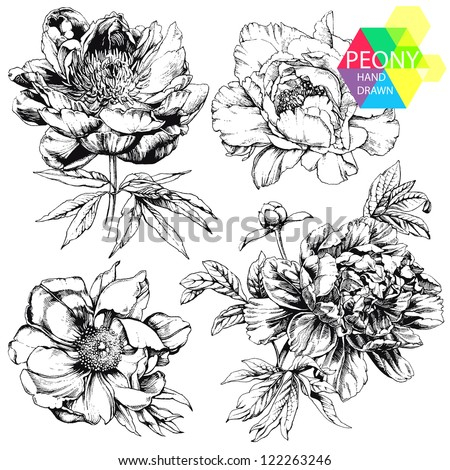 Engraved hand drawn illustrations of ornate peonies. Flower buds, leaves and stems can be easily separated and removed