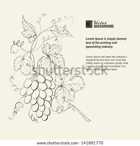 Engraving of grapes branch. Vector illustration. - stock vector