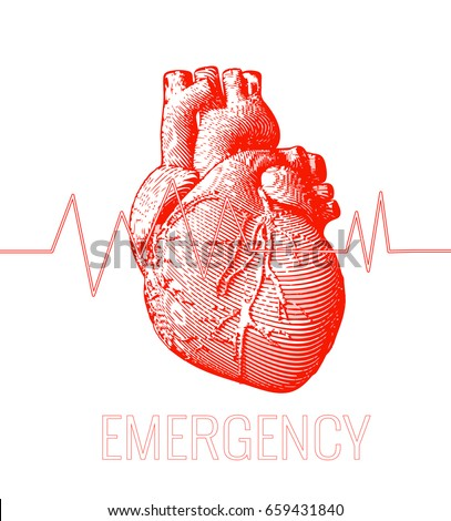 Human Heart Stock Images, Royalty-Free Images & Vectors ...