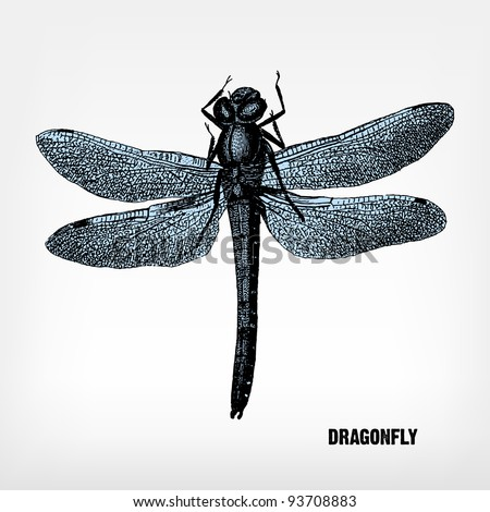 "Engraving vintage Dragonfly from ""The Complete encyclopedia of illustrations"" containing the original illustrations of The iconographic encyclopedia of science, literature and art, 1851. Vector. - stock vector"