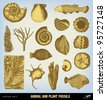 """Engraving vintage Fossils set from """"The Complete encyclopedia of illustrations"""" containing the original illustrations of The iconographic encyclopedia of science, literature and art, 1851. Vector. - stock vector"""