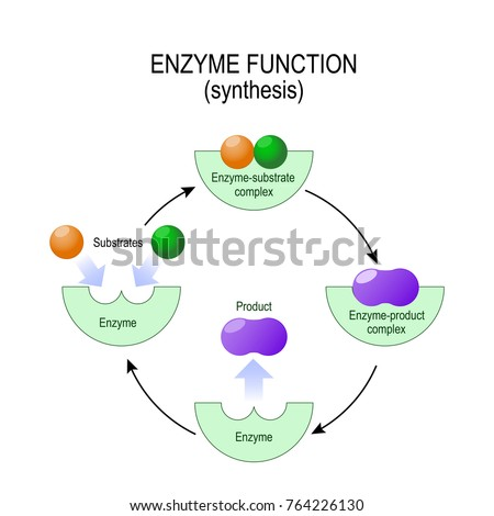 enzyme substrate complex