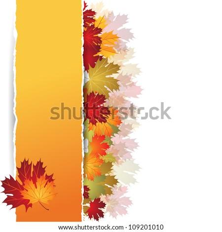 EPS10 Autumn maple leaves background. Vector illustration. - stock vector