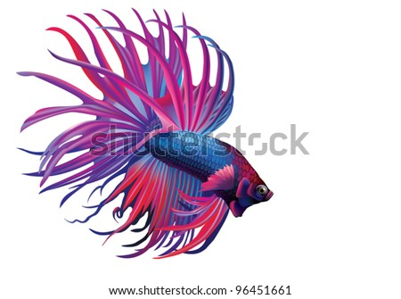 EPS 8/ Rumble Fish, or Cockerel [Betta splendens]