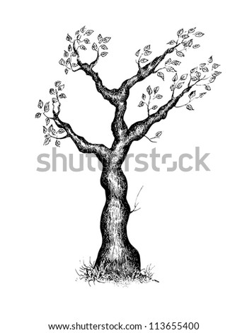 Eps 10 vector illustration of hand drawn tree
