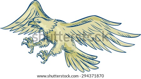 Etching engraving handmade style illustration of a bald eagle swooping viewed from the side set on isolated white background.  - stock vector