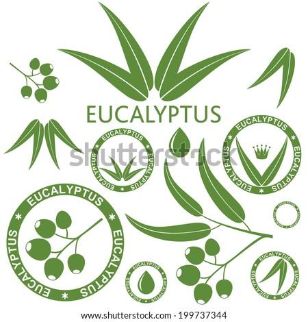 Eucalyptus - stock vector