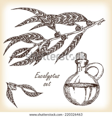 Eucalyptus branch with glass jar hand drawn vector illustration in sketch style
