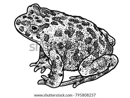 european green toad illustration drawing engraving ink line art vector