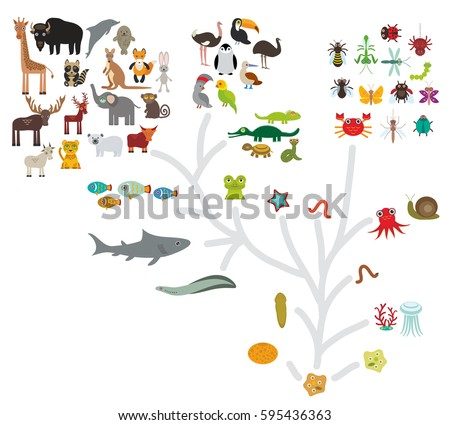 Evolution Stock Images, Royalty-Free Images & Vectors | Shutterstock