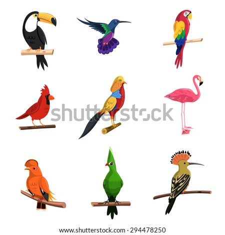 Exotic birds set with toucan parrot and flamingo isolated vector illustration - stock vector
