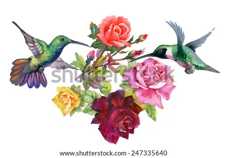 Exotic colibri birds with rose flowers colorful on white background vector illustration - stock vector