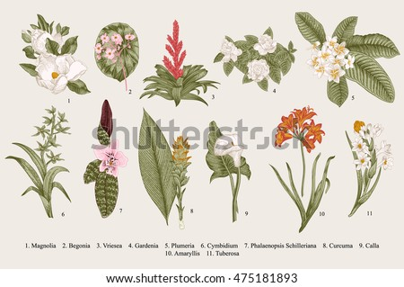 Exotic flowers set. Botanical vector vintage illustration. Design elements. Colorful.