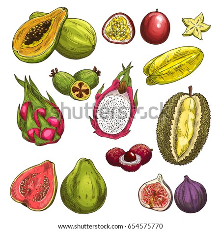 Exotic fruits vector sketch icons. Isolated set of durian, carambola starfruit and guava or figs, tropical feijoa and juicy papaya, lichee or rambutan and passion fruit maracuya or dragon fruit pitaya