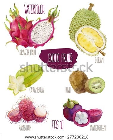 Exotic fruits. Vector watercolor illustration.