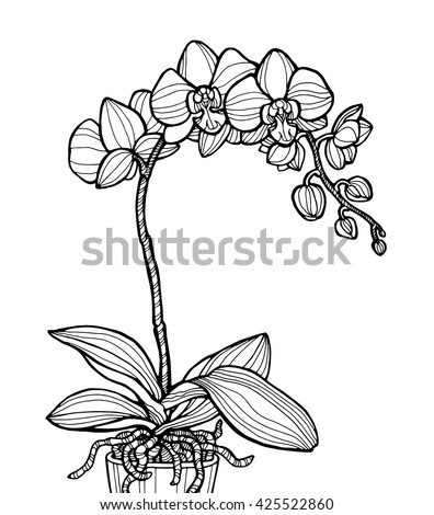 Exotic Orchid Flower Isolated Home Plant Stock Vector 582874234 ...