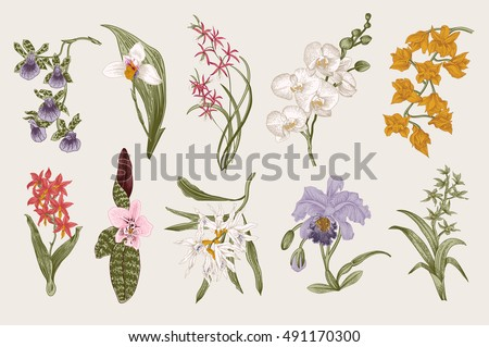 Exotic orchid set. Botanical vector vintage illustration. Design elements. Colorful.