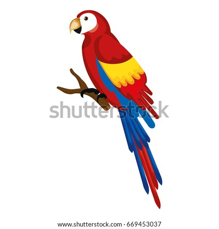 exotic parrot in branch tropical bird