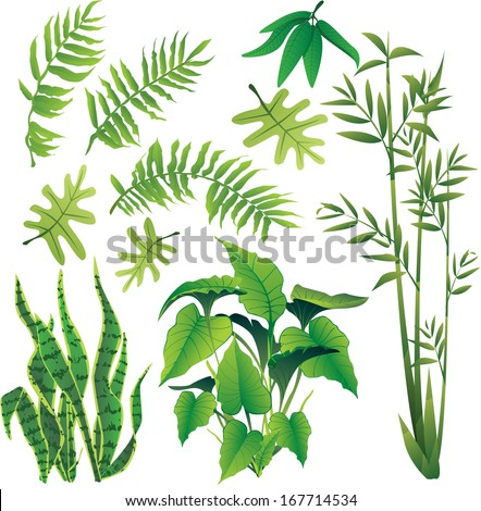 exotic plant leaves design element vector collection set - stock vector
