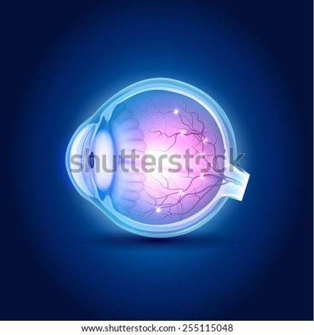 Eye anatomy blue design, beautiful bright colors. - stock vector