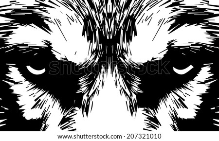Eye contact with a severe wolf. Menacing expression and awful charm of the wolf, beautiful animal and dangerous beast. Amazing black and white vector image. Great for user pic, icon, label or tattoo. - stock vector