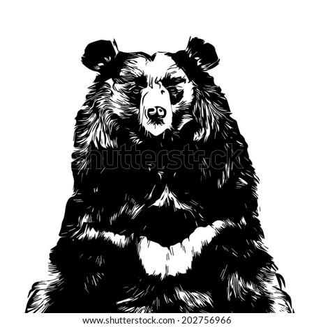 face face asiatic black bear himalayan stock vector royalty free