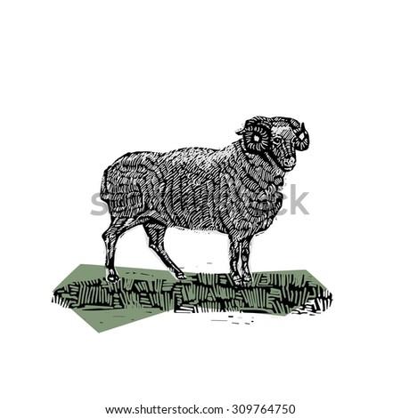farm animal sheep vintage vector engraving illustration - stock vector