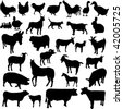 farm animals collection  - vector - stock vector