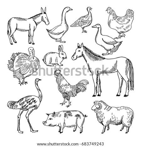 farm animals set hand drawn style stock vector royalty free