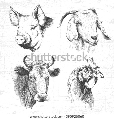 Farm animals vintage set, vector. See also other sets of animals.