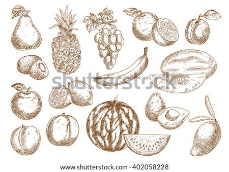 Farm harvested oranges and banana, apple and mango, pineapple and peach, pear and grape, watermelon and lemons, avocado and kiwi, plum and melon fruits - stock vector