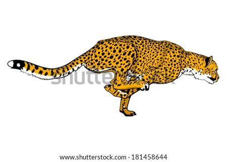 Running cheetah vector - photo#1