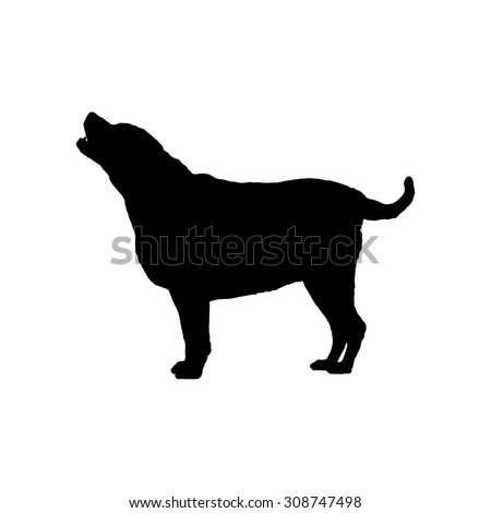 Fat labrador Retriever stand silhouette, 7 years old. Vector illustration save in 10 eps.