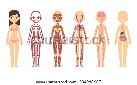 anatomy stock images, royalty-free images & vectors | shutterstock, Muscles