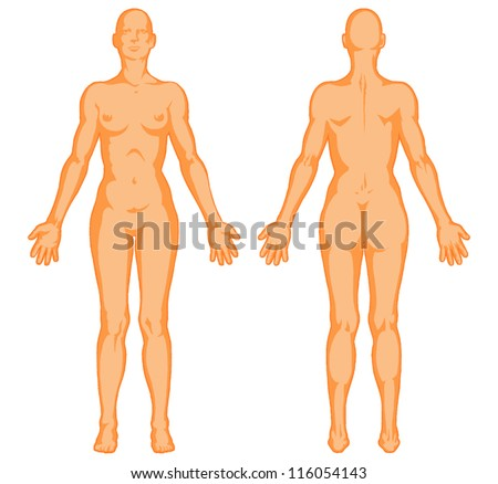 female body shapes human body outline stock vector 116054143, Muscles