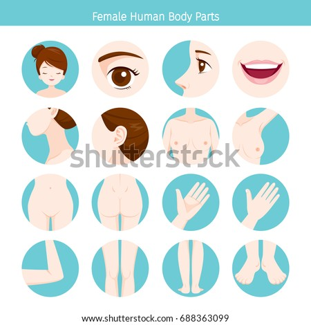 Female Human External Organs Body Set Stock Vector Hd Royalty Free