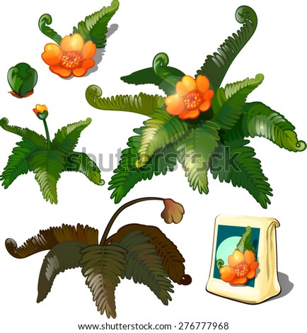 fern flowers - stock vector
