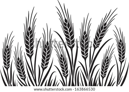 Field of Wheat, Barley or Rye vector visual illustration, black on white background, ideal for bread packaging, beer labels etc. - stock vector