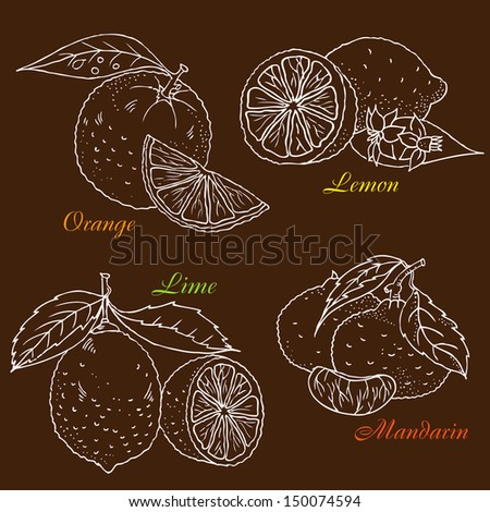 Figure citrus fruits. - stock vector