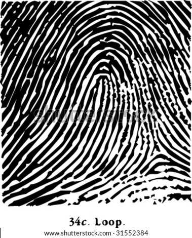 fingerprint loop - stock vector