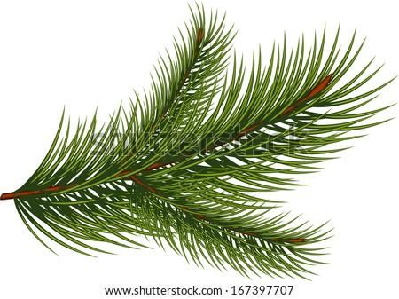 how to draw pine needles