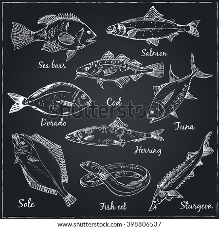 Fish collection: Dorado, Fish Eel, Tuna, Salmon, Halibut, Herring, Sea bass, Cod, Sturgeon.