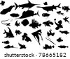 fish collection isolated on white background - stock vector